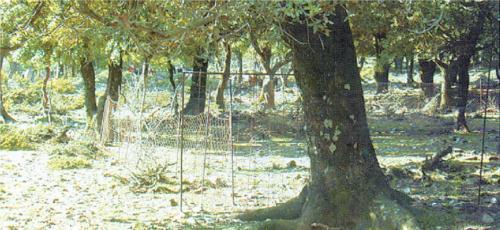 Απειλείται δάσος στην Ικαρία