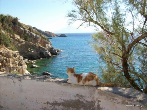 η γάτα που αγναντεύει...στον Άγιο Κήρυκο