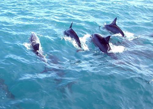 CleanAegeanSea - Συγκέντρωση υπογραφών για το Αιγαίο Πέλαγος